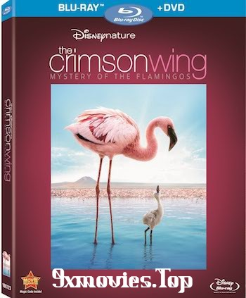 The Crimson Wing Mystery of the Flamingos 2008 Dual Audio Hindi Bluray Movie Download