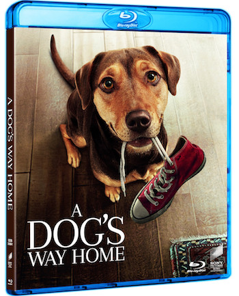 A Dogs Way Home 2019 English Bluray Movie Download