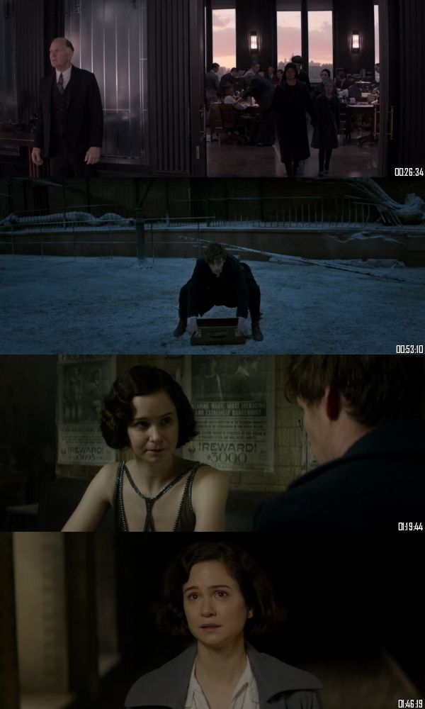 Fantastic Beasts And Where To Find Them 2016 BRRip 720p 480p Dual Audio Hindi English Full Movie Download