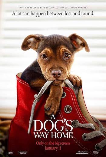A Dogs Way Home 2019 Dual Audio Hindi English BluRay 720p Movie Download