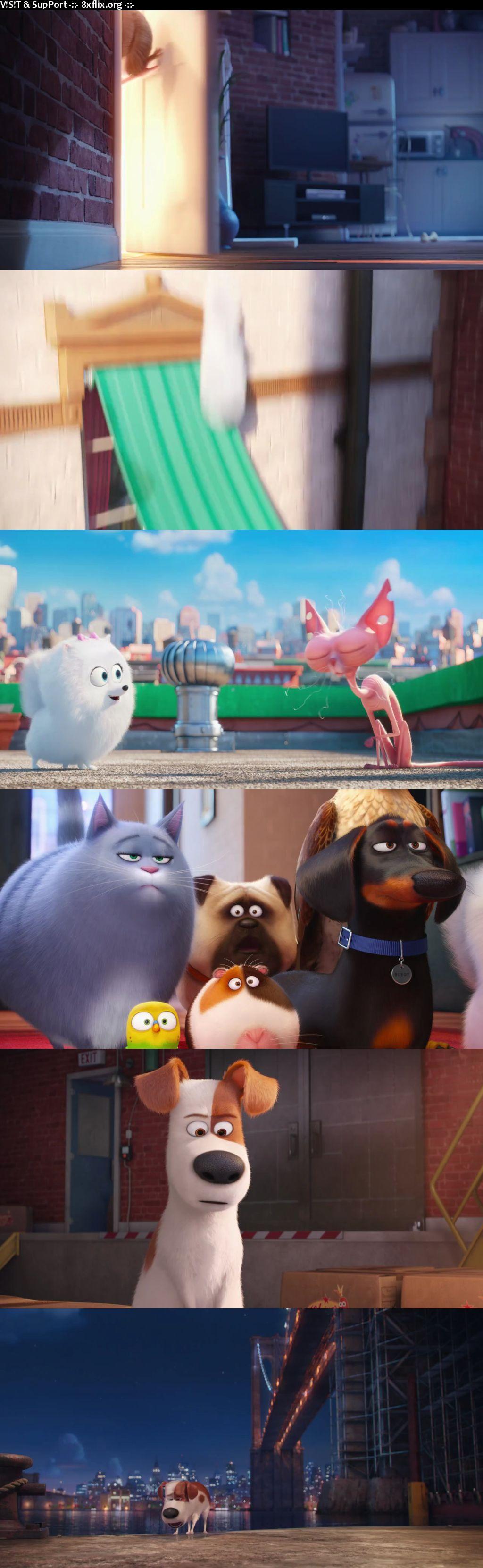 The Secret Life Of Pets 2016 Hindi English Dual Audio 720p 480p BluRay