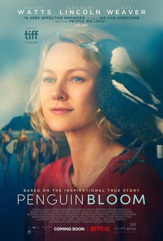 Penguin Bloom 2021 English 480p HDRip x264 300MB ESubs